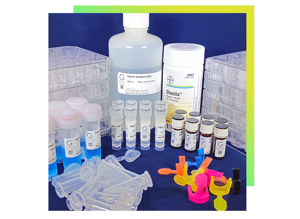 rAmylase Project lab kits to supplement Biotechnology instruction